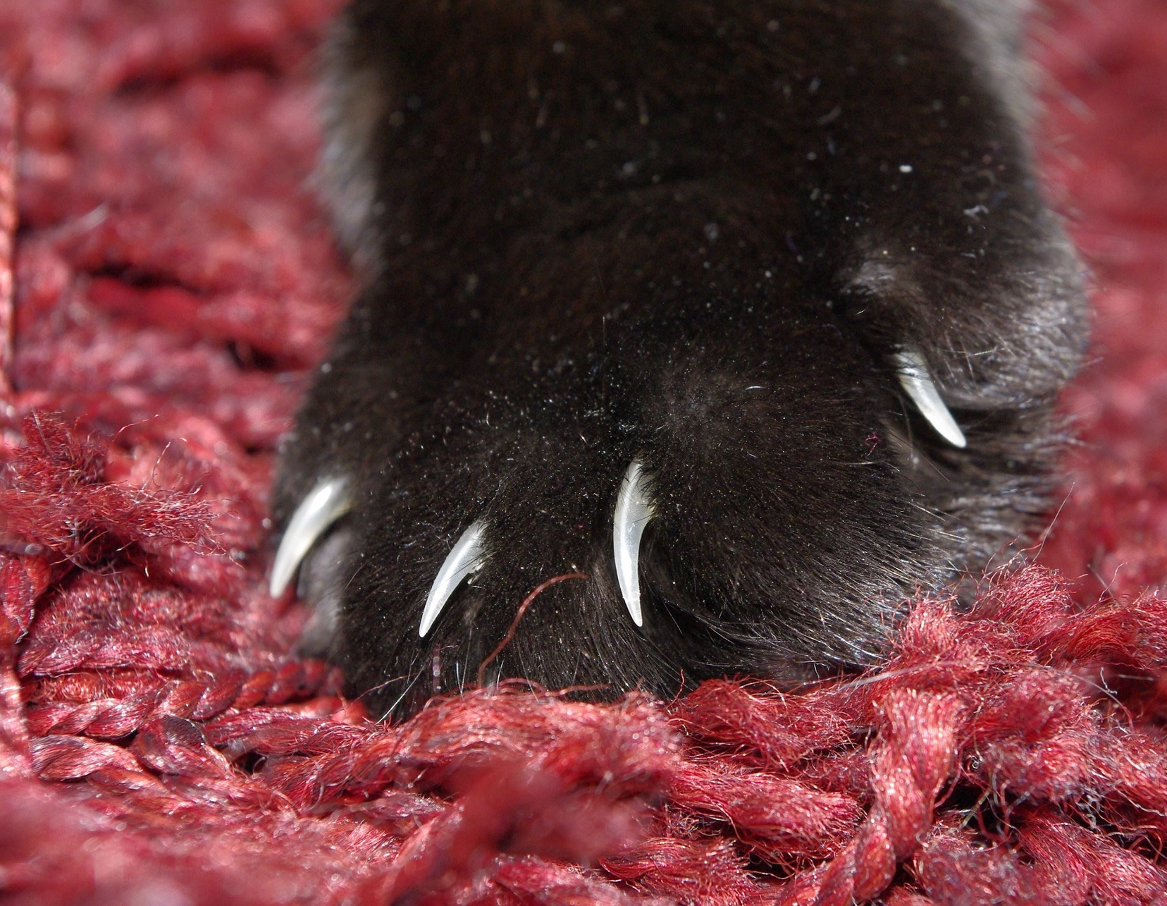 krallen blutig hund