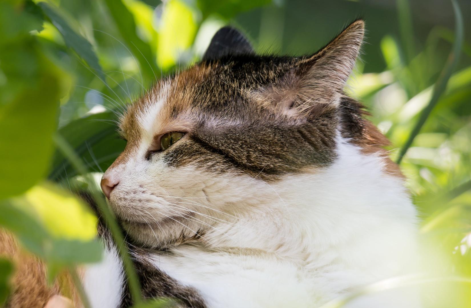katzen ängstliches verhalten